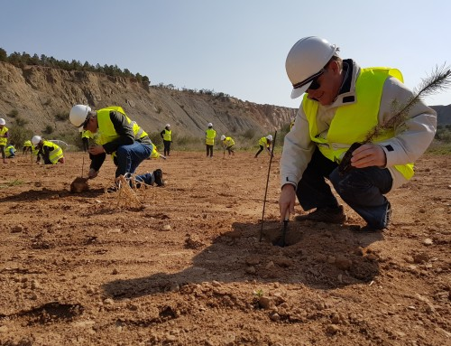 Las Canteras y Minas se comprometen por el clima con una plantación voluntaria de 60.000 árboles, con motivo de la COP25